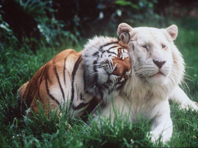 http://blogimages.bloggen.be/animallover1/213267-5fe93b12b6de21423f692e6ae6846c93.jpg