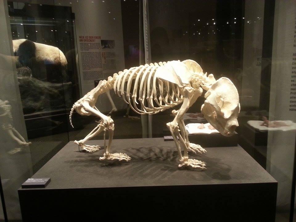 museum opgezette dieren