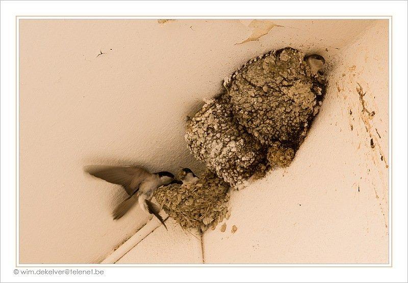 jonge meeuw uit nest gevallen