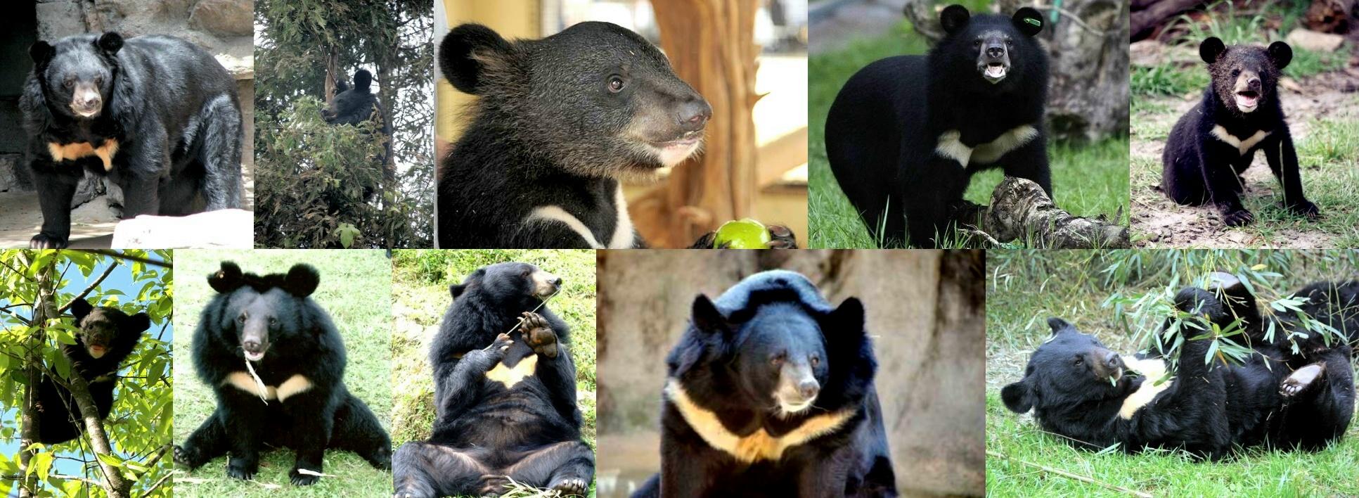 houden beren echt van honing 1985