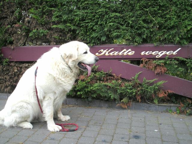 rommel buik hond