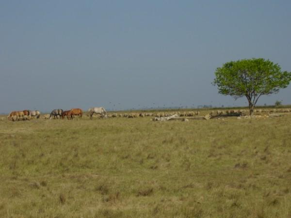 dieren van afrika als beeld