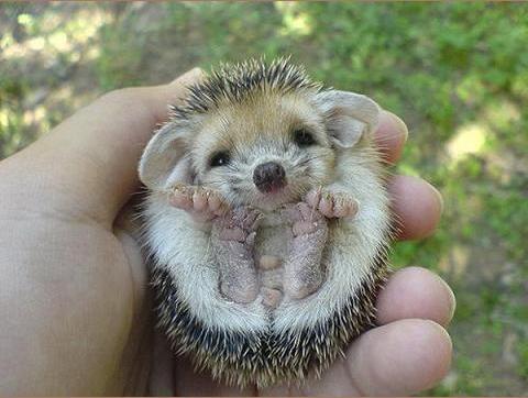 lente baby dieren