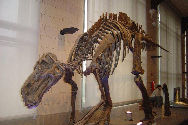 gevonden skeletten van dinos