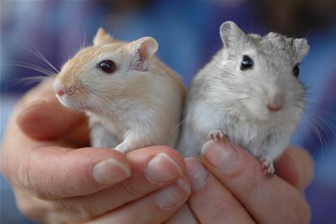hamster kooi schoon