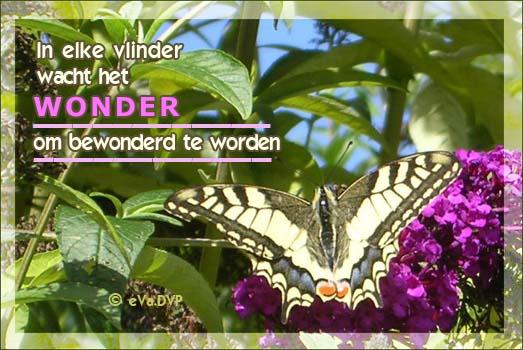 In elke vlinder wacht het wonder om bewonderd te worden